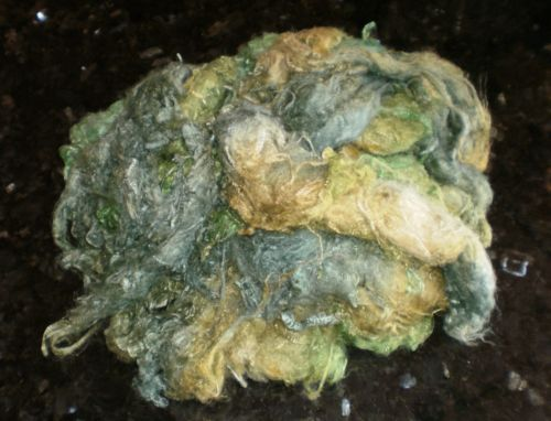 Rainforest Soybean